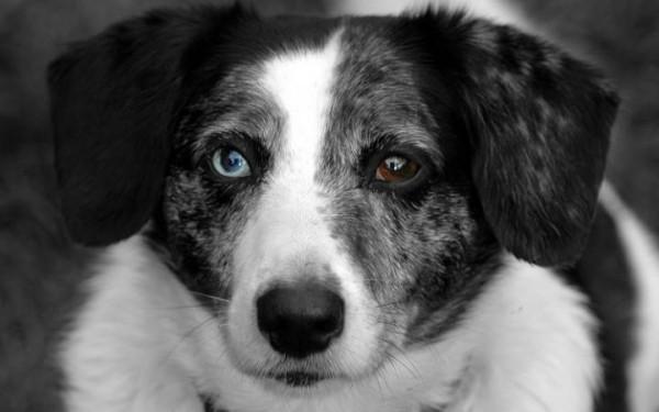 Pete Wedderburn's late dog, Spot