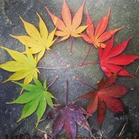 leaf lifecycle
