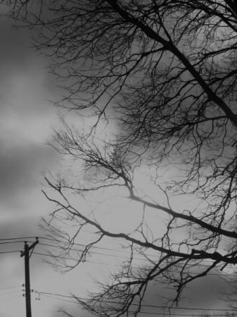 winter bleakness